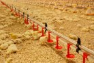 Home hatching enhances chick's resilience
