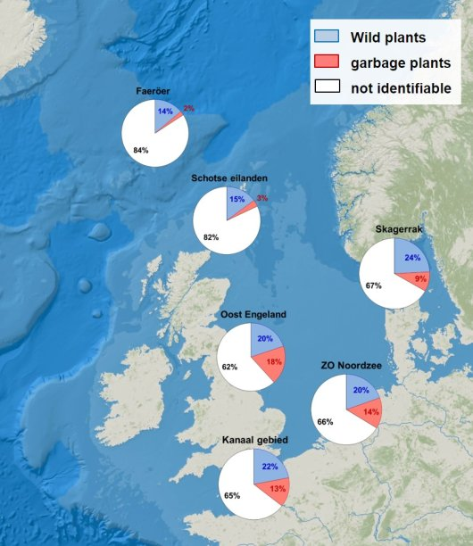 Proportions of garbage plant remains indicate higher input of litter in the Southern North Sea when compared to areas further north.