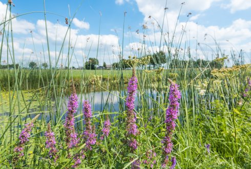 De basis voor IPM is biodiversiteit