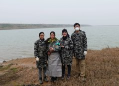 Chinese team capture waterbirds and attach transmitters in Poyang Lake (from left to right: Yali Si, Jie Wei, Yanjie Xu, Wenyuan Zhang)