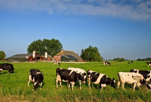 de toekomst van de europese veehouderij in 2020 wur