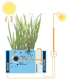 Spin-off: Electricity from living plants - WUR
