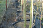 Fast-growing beech clones for the NMRi experiment