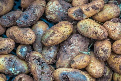 Social-ecological modelling of potato late blight. Managing crop resistance in disease control