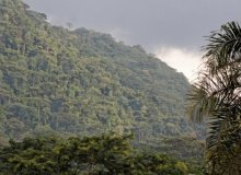 Tropical forest in Cameroon - photo Peter Groenendijk