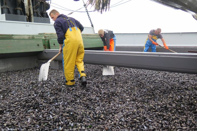 Traditional mussel bottom cultures depend on the environment for seed and feed. Wageningen University & Research works together with mussel growers to improve understanding of culture-environment relations. Photo: Tinka Murk