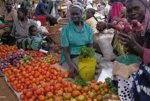 PROIntensAfrica, towards sustainabkle food and nutrition security in Africa