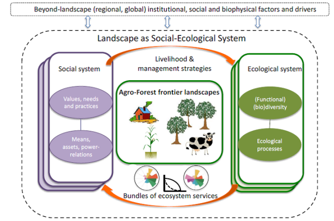 Fig. 1. Framework for the interdisciplinary analysis of relationships between functional diversity, ecosystem services, and human actions within a dynamic social-ecological system at the landscape scale (dotted line). The system of interest is subject to external drivers at regional and global scales and, in turn, impacts on social and biophysical factors at larger spatial scales. The solid boxes represent the social (purple) and ecological (green) components within the system. Different layers within the ecological system (green) indicate different land use types of configurations with different (functional) biodiversity and associated ecological process, leading to different bundles of ecosystem services.  Layers within the social system (purple) represent heterogeneity of (groups of) actors with different values and needs, means and assets, resulting in different actor strategies and landscape management decisions. The orange arrows connect both component of the social-ecological system and represent the interdisciplinary nature of the framework. Bundles of ecosystem services (multi-coloured flower diagrams) are subject to synergies and trade-offs that can take different relationships.