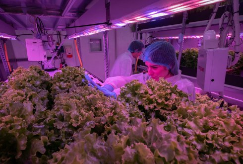 What is the cost of vertical farming?