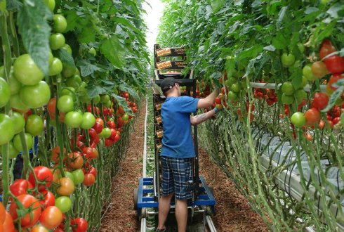 Final Programme Wageningen Summer School on Greenhouse Horticulture 2015