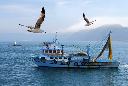 Understanding social sustainability of capture fisheries