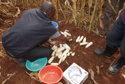 Micronutrients for better yields