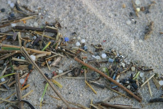 During the early 1980s, industrial pellets of different types were a common feature in nearly every new tideline. Nowadays, such chronic pollution seems replaced by more incidental occurrences of a single type of pellet.