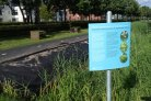 Control of Japanese knotweed and giant hogweed on campus