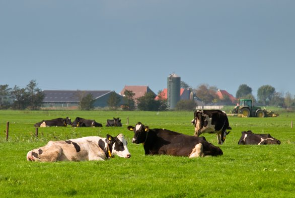 International Symposium on Dairy Cattle Nutrition 2020: Energy metabolism in dairy cows