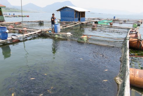 Improving aquaculture breeding programs in Indonesia