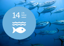 Life below water, WUR Sustainable development goal