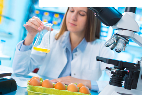 Follow single courses from online Master Food Technology