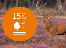 Life on Land - WUR Sustainable Development Goal