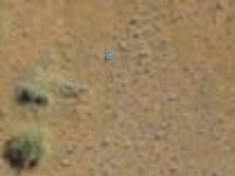 Figure 2. Zoomed in on the encircled area in Figure 1. Blue square shows the animal.