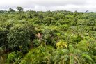 Tropical forests as a climate solution