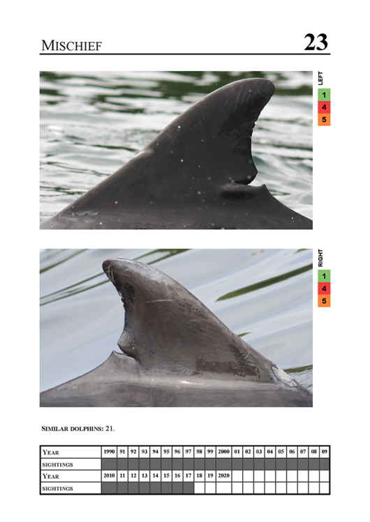 "Sightings of the male 'Mischief'. Dolphin ""Mischief"" can be recognised by a deep notch at the root of the dorsal fin. Source: University of Aberdeen catalogue."