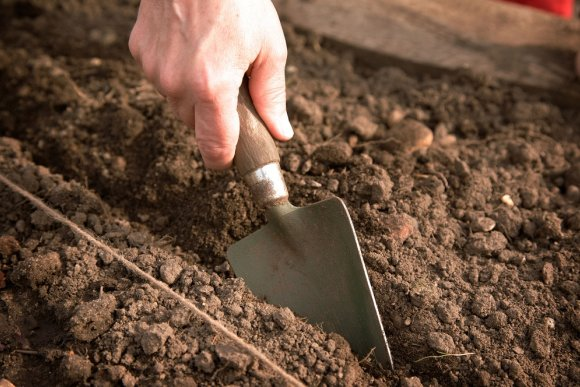 Online knowledge about soil and fertilization in bulb cultivation