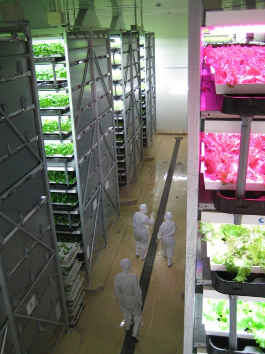 vertical farm.jpg