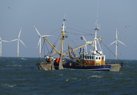 Opportunities and risks of wind farm growth for the fishing industry