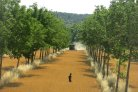 Design and development of agroforestry systems suitable for the Dutch context