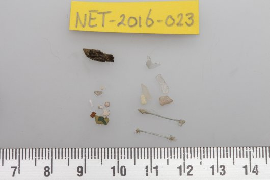 Fulmar NET-2016-023 stomach content. 7 Plastic particles weighing 0.0194 gram (1 sheet; 2 threads, and 4 small fragments)   In terms of mass, this is far below the average plastic contents in fulmar from the North Sea. Additionally there were some paint chips and a piece of processed wood.