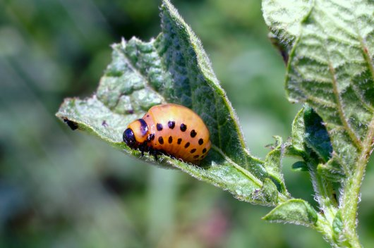Distance Learning Course: Plant Pathology and Entomology