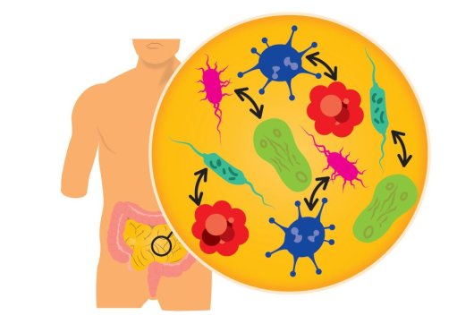 With synthetic biology, you could design a new intestinal flora.