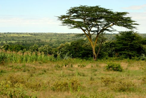 The facilitative role of trees in tree-grass interactions in savannas