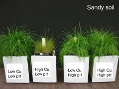 Cu-pH pot experiment in sandy soil