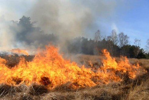 4 million euro for training programme new experts in wildfires
