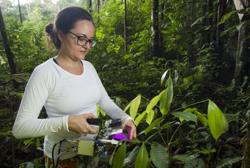 AMAZON-FACE - impact of future elevated CO2 on the forests of Amazonia