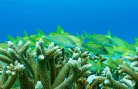RESCQ – Restoring Ecosystem Services and Coral Reef Quality