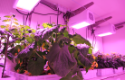 EDEN ISS: How to cultivate vegetables in space