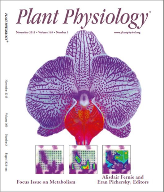 Metabolite maps of living plant tissues with imaging mass spectrometry