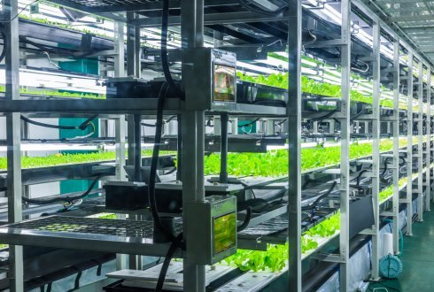Vertical Farming: Can Urban Agriculture Feed a Hungry World?