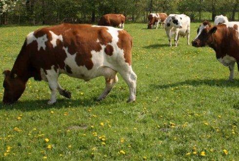 Ecologically intensive agriculture good for farmers ánd the