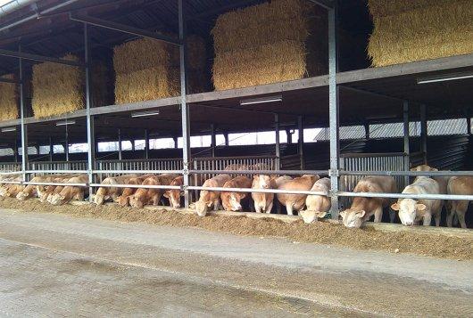 KWIN Rundveehouderij en Varkenshouderij nu apart verkrijgbaar
