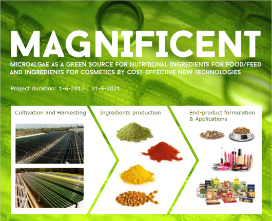 MAGNIFICIENT: Microalgae as a green source for nutrition