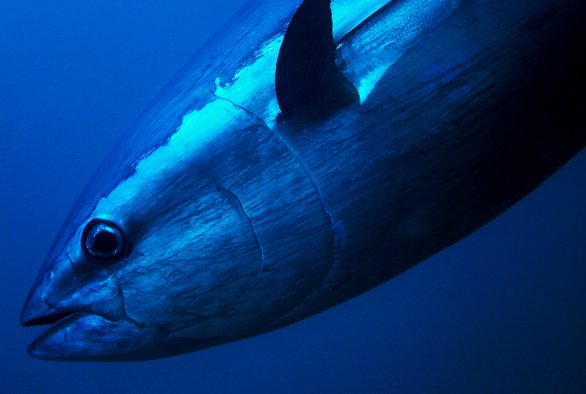 Confronting myths around tuna governance