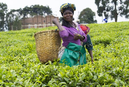 Microcredit to women and its contribution to production and household food security