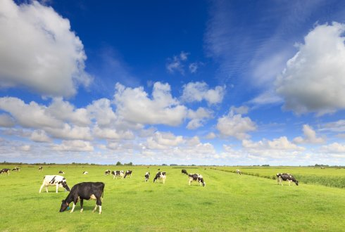 Price of milk to rise less quickly in the long-term than expected