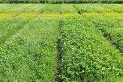 Factsheets over grasklavermengsels in akkerbouwrotaties en over de invloed van stikstof op de slagingskans van herinzaai van grasklaver