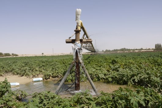 Sustainable water use for potato production in El Oued, Algeria