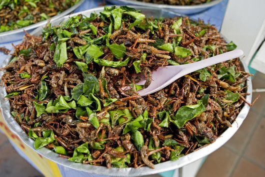 A meal prepared with crickets